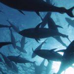 Ciné-débat – Les colibris de l'océan